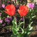 spring_flowers-150x150