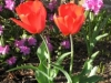 spring_flowers-205x300