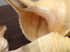 cage_inlets_shells-720x288